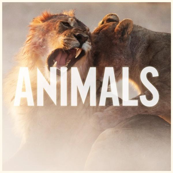 maroon_5_animals_single